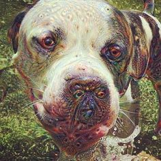 It's been a while since I fed Google's Deep Dream machine and my friends Ally and Niles' pic of Vaski seemed perfect. @n00dle10 @niles_devinney #deepdream #nightmarefuel #pitbullsofinstagram by themightyincisor