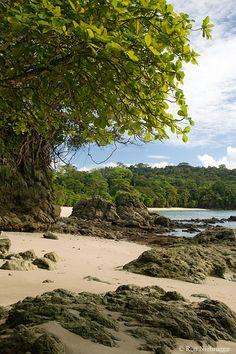 Manuel Antonio National Park, North Puntarenas es un parque con diferentes animales. Hay una gran cantidad de animales descubiertos aquí.