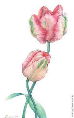 Купить Акварель Вместе. Тюльпаны - тюльпаны, акварель, картина акварелью, цветы акварелью, ботанический рисунок
