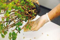 Čo potrebujú jednotlivé druhy izbových rastlín, aby sa im darilo? How To Dry Basil, Herbs, Herb, Medicinal Plants