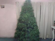 El pino antes de la decoración