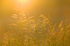 Golden Grass by Ree Drummond...free for download YAY!