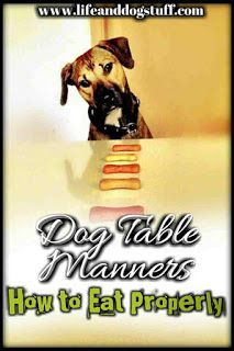 Dog Table Manners - How to Eat Properly. #dogs #funnydogs