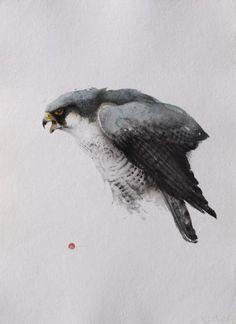 Peregrine Falcon  Karl Martens