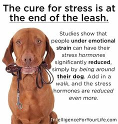 Dogs are great for stress