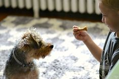 Rather of utilizing white flour in your pet dog cookies or any other homemade dog food, you can utilize entire grains like quinoa, oats and wild rice instead. Dog Biscuit Recipes, Dog Treat Recipes, Healthy Dog Treats, Dog Food Recipes, Homemade Dog Cookies, Homemade Dog Food, Essential Oils Dogs, Peanut Butter Dog Treats, Dog Biscuits