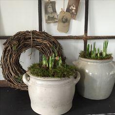 Voorjaarsbolletjes in grespot
