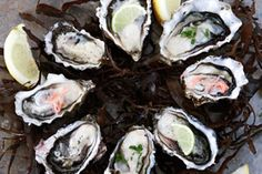 Oysters and snapper patties – Recipes – Bite