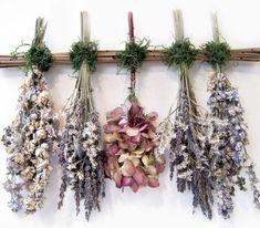 pěstování květin na sušení - Hledat Googlem
