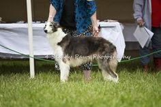 Quinni East Coast, Goats, Dog, Photography, Animals, Diy Dog, Photograph, Animales, Animaux
