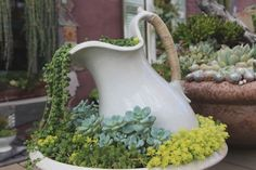 Lovely succulents in a broken bowl and pitcher set.