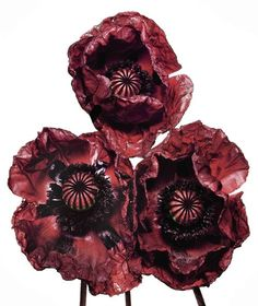 Poppies by Irving Penn