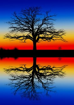 Sunset with orange and yellow fading to deep blue with a single tree silhouette. Beautiful Sunset, Beautiful World, Pretty Pictures, Cool Photos, Amazing Pictures, Water Reflections, Tree Silhouette, Amazing Nature, Belle Photo