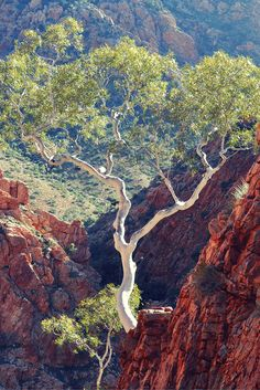 Most people who visit Standley Chasm never do this. This little known secret will not only help you escape the tourist crowds, you'll be taking jawdropping photos and seeing Standley Chasm like you've never seen it before. Australian Plants, Australian Bush, Western Australia, Australia Travel, South Australia, Australia Landscape, Belleza Natural, Beautiful Landscapes, Landscape Paintings
