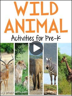 Safari Theme - - Pre-K & Preschool theme ideas for learning about African animals. Find more Wild Animal Activities for Pre-K Books Check here for a complete list of Safari Animal Books Elephant Conga Line {Large Motor} Children walk like. Animal Activities For Kids, Animal Crafts For Kids, Animals For Kids, Baby Animals, Preschool Jungle, Preschool Themes, Preschool Books, Preschool Crafts, Preschool Centers