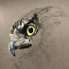 new ideas bird of prey drawing hawks Bird Drawings, Animal Drawings, Eagle Art, Bird Artwork, Rabe, Owl Art, Pastel Art, Wildlife Art, Animal Paintings