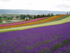 Hokkaido, Japan. Is this field for real?