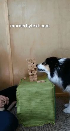 This is truly an amazing dog. She knows physics and understood the game itself. amazing animals This is truly an amazing dog. She knows physics and understood the game itself. Cute Funny Animals, Funny Animal Pictures, Cute Baby Animals, Funny Dogs, Animals And Pets, Cute Pictures, Cute Puppies, Dogs And Puppies, Doggies