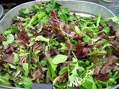 Salad Garden Seeds  Mesclun Mix  Gourmet Greens  Heirloom Varieties  Lilianas Garden * You can get additional details at the image link.