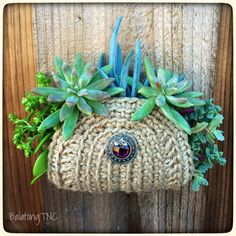 Bring back the vintage craft of crochet and add some succulent bling.