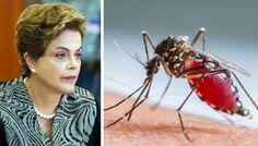 BLOG DO IRINEU MESSIAS: Dilma pode unir o país contra o mosquito