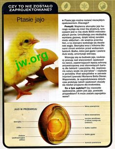 Ptasie jajo