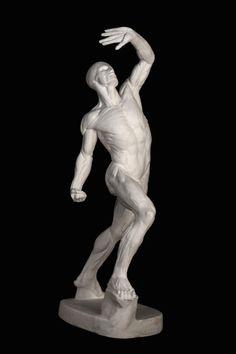 Muscles Form Leg Legs Arm Arms Gesture Torso Shoulder anterior front houdon_anatomy