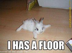 i has floor!