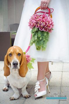Floral Purse & Floral Dog Collar by Flower Factor, via Flickr