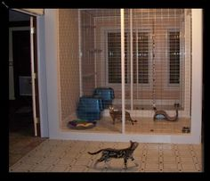 In home cattery