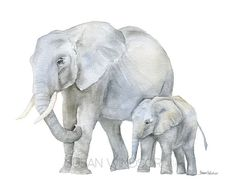 Pintura acuarela de elefantes reproducción de impresión de