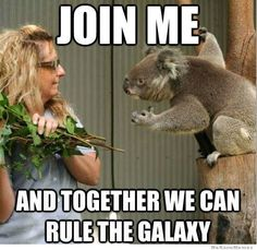 funny koala memes | Though some suggestion / word used might be harsh and hard to ...