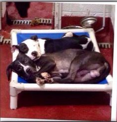 Another cuddling pair of dogs in need of adoption from animal control