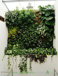 Jardín vertical realizado en Guatemala por Paisajismo Urbano y su franquicia local By Botanik 9 meses después de su plantación