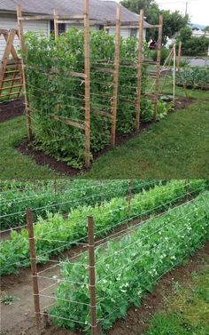 15 easy attractive DIY cucumber trellis ideas on how to build vertical garden growing structures with simple materials for productive vegetable gardening! - A Piece of Rainbow backyard, landscaping, gardening tips, homesteading grow your own food Backyard Vegetable Gardens, Veg Garden, Vegetable Garden Design, Garden Trellis, Edible Garden, Garden Beds, Outdoor Gardens, Vine Trellis, Bean Trellis