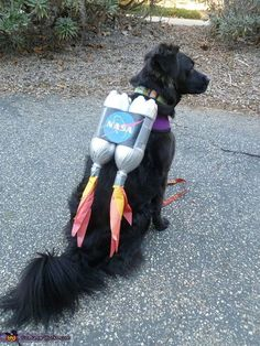Insanely Cute Dog Halloween Costumes: Astronaut DIY Dog Costume | If you're looking for the best dog Halloween costumes, such as dog Halloween costumes DIY, DIY Halloween costumes for dogs, big dog Halloween costumes funny and more! So, if you're in the mood for some easy Halloween costumes for dogs funny, check out these cute Halloween costumes for dogs and funny dog costumes halloween! #doghalloweencostumes #halloweencostumesfordogs #halloweencostumes #dogs #dogcostumes… Cute Dog Halloween Costumes, Large Dog Costumes, Chat Halloween, Diy Dog Costumes, Pirate Costumes, Horse Costumes, Costume Ideas, Costume Chien, Diy Pet