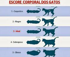 Blogateira: PAPO DE GATEIRA: Obesidade em Gatos