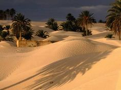 size: Photographic Print: Palm Trees and Sand Dunes, Douz, Tunisia Poster by Wayne Walton : Travel Oasis, Deserts Of The World, Desert Life, Egypt Travel, Travel Goals, Palm Trees, Places To See, Merida, Beautiful Places
