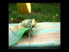 Funny Cicada Walk Cycle - YouTube