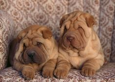 Image detail for -too-cute-puppies-06-625x450-2.jpg