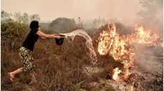 Image copyright AFP Image caption Despite criticism of Indonesia, its population bore the brunt of the smoke's effects A haze caused by deliberately started forest fires in Indonesia may have caused 100,000 premature deaths last year, according to US research. More than 90% were in Indonesia i...