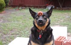 Et ce chien qui voue une passion intense à sa récompense.