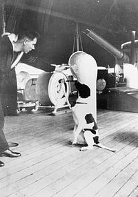 Judy- An English Pointer that was awarded the Dicken Medal by the PDSA for helping save the lives of the Grasshopper crew and the only dog to be registered as a Second World War Prisoner of War.