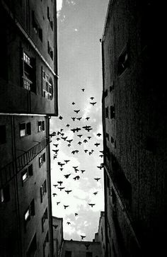 62 Ideas Black And White Bird Photography Sky For 2019 - Beauty Black Pins Urban Photography, Street Photography, Photography Ideas, Color Photography, Contrast Photography, Grunge Photography, Minimalist Photography, People Photography, Newborn Photography