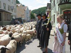 Altmühltaler Lamm-Auftrieb 2015 im Markt Mörnsheim Street View, Lamb, Tourism, Culture