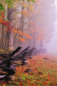 Fall in the Smokey Mountains
