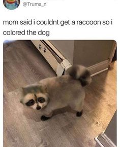 26 Doggo Memes Fresh Off The Grill - World's largest collection of cat memes and other animals Cute Animal Memes, Animal Jokes, Cute Funny Animals, Funny Animal Pictures, Cute Baby Animals, Funny Cute, Funny Dogs, Funny Images, Cute Dogs