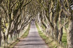 The famous Dark Hedges in Co Antrim, which have become a major tourist attraction for thousands of Game of Thrones fans, have just been voted one of the most beautiful places in the world. World Most Beautiful Place, Beautiful Places, Dark Hedges Ireland, Game Of Thrones Locations, King's Landing, Natural Phenomena, Filming Locations, Ireland Travel, Northern Ireland