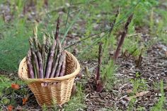 Wicker Baskets, Decor, Gardening, Decoration, Lawn And Garden, Decorating, Horticulture, Woven Baskets, Deco