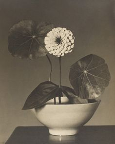 Worcester Art Museum - Charles Sheeler: Zinnia and Nasturtium Leaves